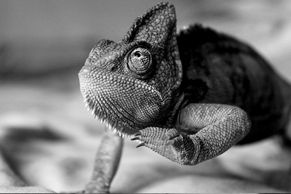 Chameleon, indicating the need to be adaptive in your marketing strategy.